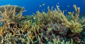 Coral Breeding Programme - Amun Ini Beach Resort & Spa