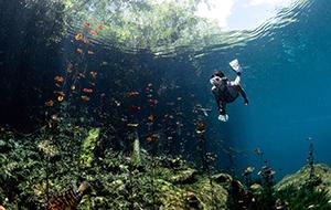 CenotesDiving©TomStGeorge_thumbnail