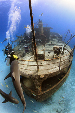 Stuart Cove's Dive Bahamas wreck preview