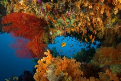Fiji colourful corals